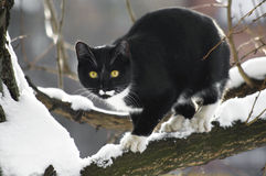 Schwarze Katze auf einem schneebedeckten Baumast Stockbilder