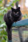 Schwarze Katze auf einem Zaun Stockbild