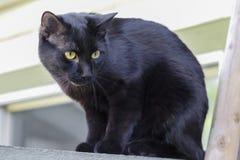 Schwarze Katze auf einem Zaun Lizenzfreie Stockbilder