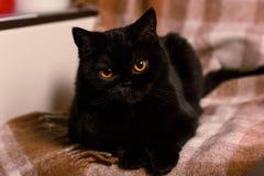 Schwarze Katze auf einer Sahneabdeckung Lizenzfreie Stockfotos