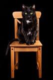 Schwarze Katze auf hölzernem Stuhl Lizenzfreie Stockfotos