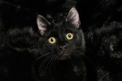 Schwarze Katze auf schwarzem Pelz Lizenzfreies Stockbild