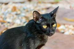 Schwarze Katze auf Steinboden Stockfotografie