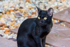Schwarze Katze auf Steinboden Stockbilder
