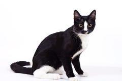 Schwarze Katze auf weißem Hintergrund Stockfoto