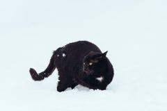 Schwarze Katze auf weißem Hintergrund lizenzfreie stockfotografie