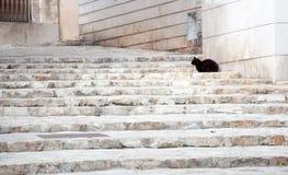 Schwarze Katze auf weißem Treppenhaus. Lizenzfreies Stockbild