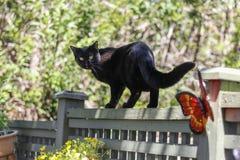 Schwarze Katze auf Zaun Stockfoto