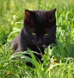 Schwarze Katze aufpassendes ladybeetle Lizenzfreie Stockfotografie