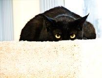 Schwarze Katze/Ausdruck lizenzfreie stockfotos