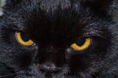 Schwarze Katze betrachtet Sie mit hellen gelben Augen lizenzfreie stockfotografie