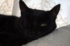 Schwarze Katze blinzelnd, blinzelt für die Kamera Lizenzfreie Stockbilder