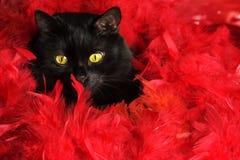 Schwarze Katze in den roten Federn Stockfotos