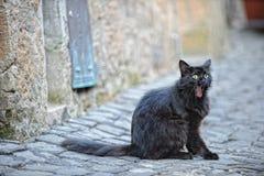 Schwarze Katze in den Straßen von Cortona, Italien lizenzfreie stockbilder