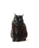 Schwarze Katze in der Frontseite Lizenzfreie Stockfotos