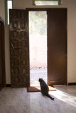 Schwarze Katze in der Tür Lizenzfreie Stockbilder