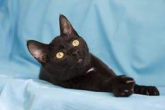 Schwarze Katze, die auf dem blauen Hintergrund liegt Stockfotos