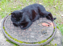 Schwarze Katze, die auf einem Abwasserkanaleinsteigeloch schläft Stockfotos