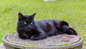 Schwarze Katze, die auf einem Abwasserkanaleinsteigeloch schläft Stockbild