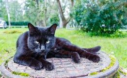 Schwarze Katze, die auf einem Abwasserkanaleinsteigeloch schläft Lizenzfreies Stockfoto