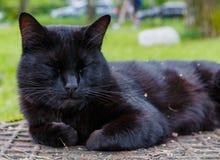 Schwarze Katze, die auf einem Abwasserkanaleinsteigeloch schläft Stockbilder