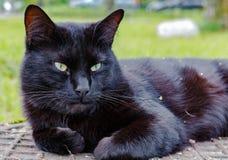 Schwarze Katze, die auf einem Abwasserkanaleinsteigeloch schläft Lizenzfreie Stockbilder