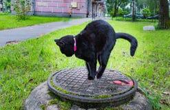 Schwarze Katze, die auf einem Abwasserkanaleinsteigeloch sitzt Stockfotos
