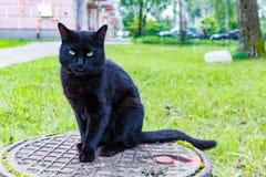 Schwarze Katze, die auf einem Abwasserkanaleinsteigeloch sitzt Stockfotografie