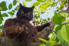 Schwarze Katze, die auf einem Baumast liegt Stockbild