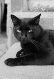 Schwarze Katze, die auf einem Schritt sitzt Lizenzfreie Stockfotos