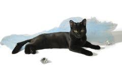 Schwarze Katze, die auf einem weißen Hintergrund vor einem blauen Stoff liegt Stockbilder