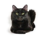 Schwarze Katze, die auf einem weißen Hintergrund, Kamera betrachtend liegt Stockfotos