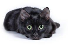 Schwarze Katze, die auf einem weißen Hintergrund, Kamera betrachtend liegt Lizenzfreie Stockfotos