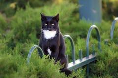Schwarze Katze, die auf einem Zaun im Garten sitzt Lizenzfreie Stockfotografie