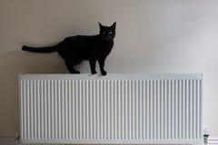 Schwarze Katze, die auf einen Heizkörper steht Stockbild