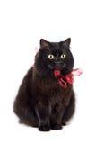Schwarze Katze, die den roten Bogen getrennt trägt Lizenzfreie Stockfotos