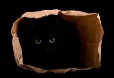 Schwarze Katze, die in den Schatten einer Papiertüte sich versteckt Stockbilder