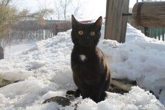 Schwarze Katze, die draußen im Schnee sitzt stockfoto