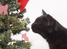 Schwarze Katze, die einen Weihnachtsbaum schnüffelt Lizenzfreie Stockfotos