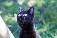 Schwarze Katze, die etwas schaut Lizenzfreies Stockbild