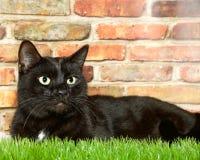 Schwarze Katze, die in Gras gegen eine Backsteinmauer legt Lizenzfreie Stockfotografie