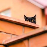 Schwarze Katze, die heraus von hinten die Wand späht Lizenzfreies Stockfoto