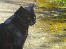 Schwarze Katze, die irgendwo im Abstand schaut lizenzfreie stockfotos