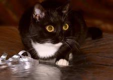 Schwarze Katze, die mit einem dekorativen Band spielt Stockfotografie