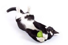 Schwarze Katze, die mit einem Spielzeug spielt Lizenzfreies Stockfoto