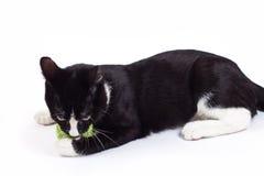 Schwarze Katze, die mit einem Spielzeug spielt Lizenzfreie Stockbilder