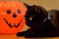 Schwarze Katze, die nahe bei Kürbissteckfassung-olaterne legt Stockfoto