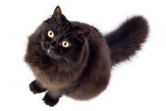 Schwarze Katze, die oben schaut Stockbild