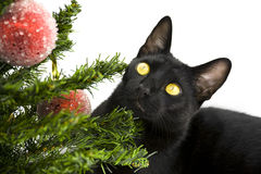 Schwarze Katze, die unter Weihnachtsbaum liegt Lizenzfreie Stockfotos