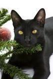 Schwarze Katze, die unter Weihnachtsbaum liegt Lizenzfreies Stockfoto